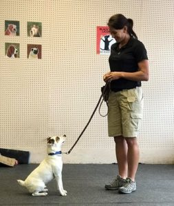 Dog Training DFW
