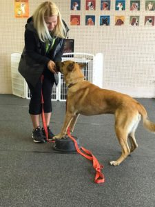 private-obedience-dog-training