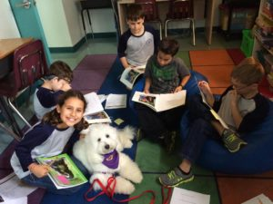 DFW Therapy Dog Training
